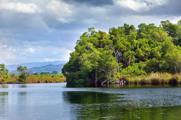 Black River Safari Boat Tour and YS Falls